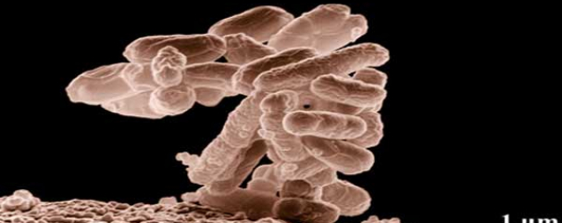 Outbreak of E. coli Infections